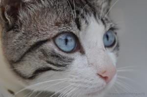 Animais/O olhar de um felino