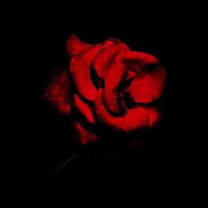 /A rosa que vos ofereço