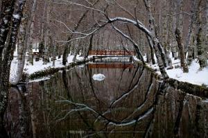 Paisagem Natural/... frozen paradise ...