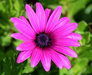 /Flor do meu jardim