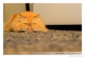 /Cat look