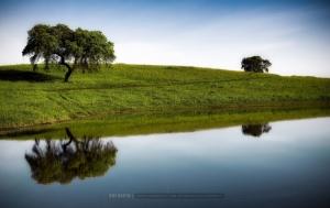 Paisagem Natural/...through the fields...