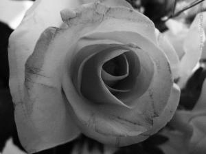 Outros/Rosa cinza