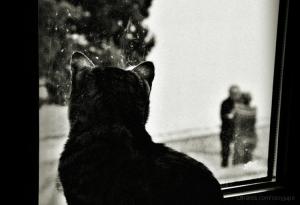 Animais/I'm watching you.....