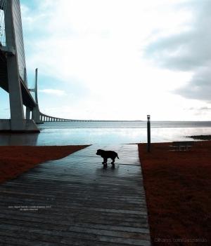 Paisagem Urbana/my dog Pacha