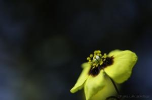 Outros/As flores refletem bem o verdadeiro. Quem tenta po