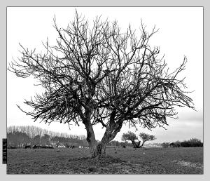 /Árvore II