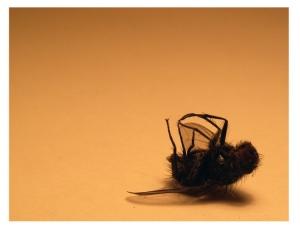 /Não passas de uma mosca morta!