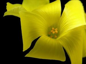 /Amarelo Negro