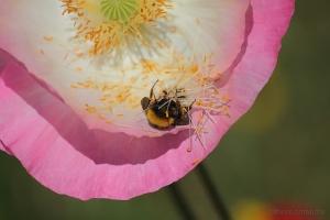 /mikado para abelhas