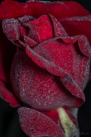 Macro/Em nome da Rosa