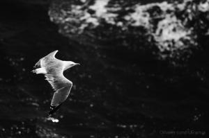 Animais/Voar baixinho