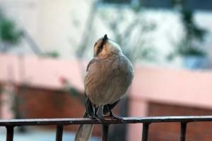 Animais/Pássaro Livre