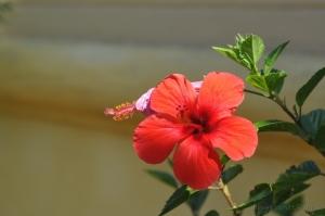 """Outros/Uma flor do """"meu jardim""""."""