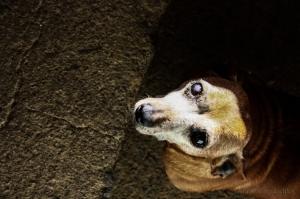 Outros/Cachorrinha cega, mas simpática... :)