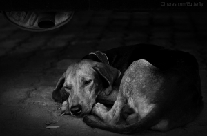 Animais/Fragilidade