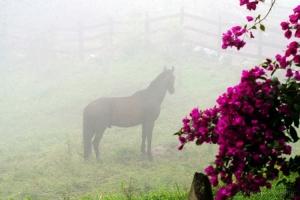 Animais/Neblina