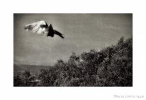 Arte Digital/Quero voar....