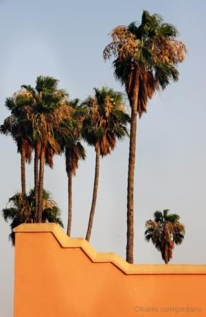 /olhar as palmeiras