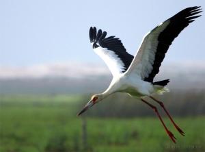 Animais/Liberdade de Voar