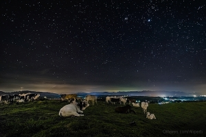 Animais/Milk Way