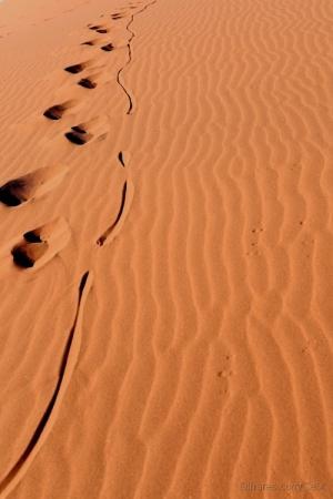 Outros/Rastos na Duna 45_Namíbia