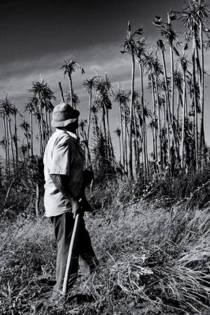 Fotojornalismo/Contemplando os Carnaubais