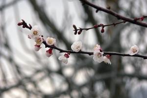 Paisagem Natural/primavera ii