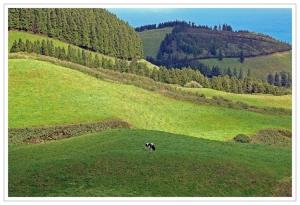 Outros/Vaca Solitária...