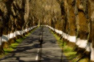 /o meu caminho