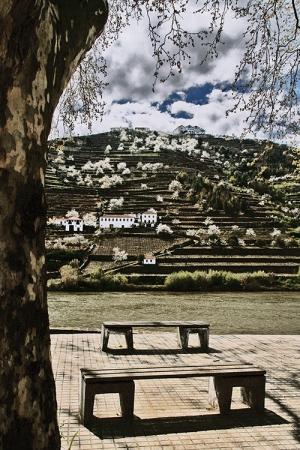 Gentes e Locais/Socalcos do Douro