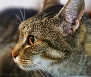 Animais/Vera...uma gata muito mimada!