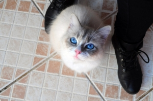 Outros/My Cat