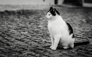 Animais/O gato de Seteais