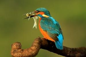 /guarda rios pescador