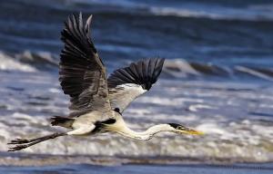 Animais/Livre para Voar