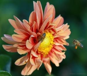 Macro/do meu mel
