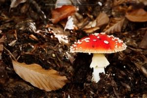 Outros/... o cogumelo e a folha ...