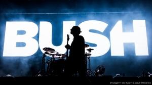 /Bush