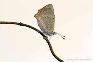 /Butterfly