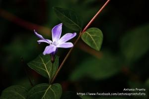 Outros/Purpura