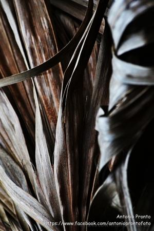 Abstrato/Palha de fogo