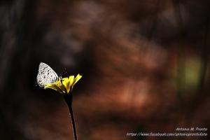 Animais/O beijo da borboleta