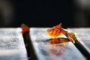 Outros/Transparência de Outono