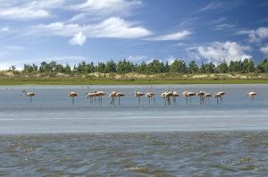 Paisagem Natural/Flamingos