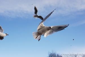 Animais/Em voo