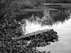 Paisagem Natural/reflexos de uma existência