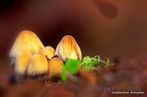 Macro/Fungos de Sintra!