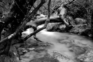 Outros/floresta negra