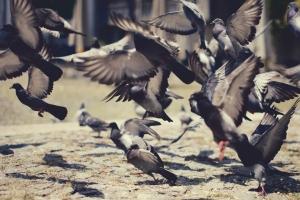 Paisagem Urbana/Fly